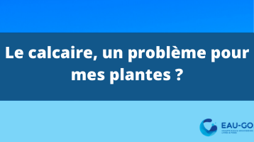 calcaire plante